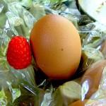 ekodanitap-organik-tarim-14